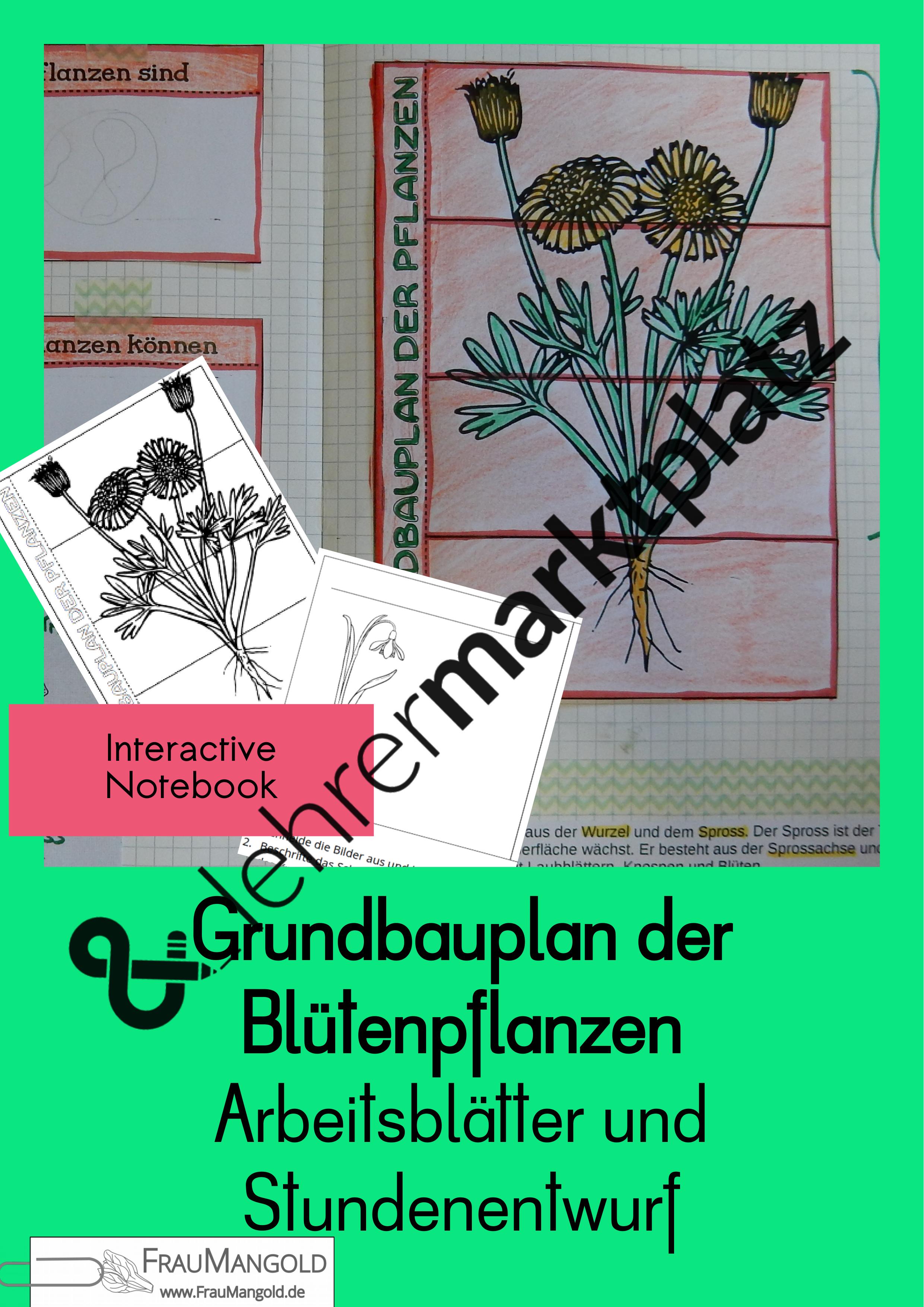 grundbauplan der bl tenpflanzen aufbau pflanzen biologie sek 1 interactive notebook. Black Bedroom Furniture Sets. Home Design Ideas